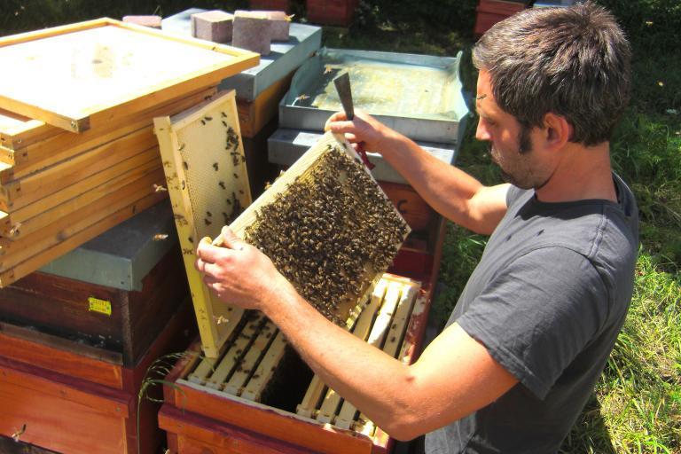 Bioland Imkerei Seusing Honig von feinjemacht