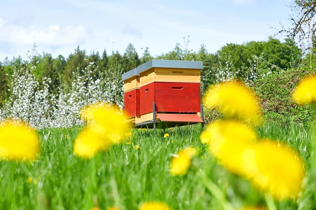 bienen-freunde Bioland-Honig von feinjemacht